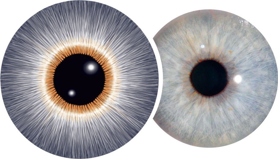 discover-iridology_page-1911