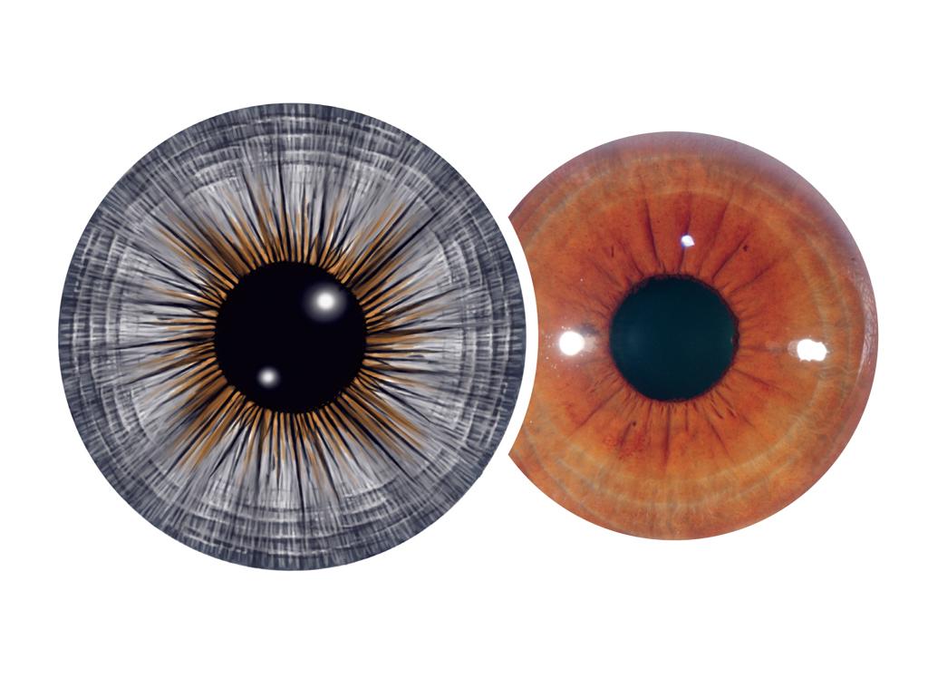 discover-iridology_page-192